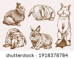graphical vintage set of... | Shutterstock .eps vector #1918378784