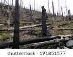 After Forest Fire