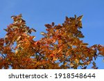 bright orange leaves and red... | Shutterstock . vector #1918548644