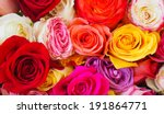 Roses In A Variety Of Colours