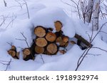 Firewood In The Snow. Pine...