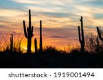 Sunset In Saguaro National Park ...