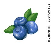 blueberry fruit berry vector...   Shutterstock .eps vector #1919096591