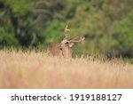 Various Wildlife In Nature In...