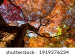 Autumn Tree Top View From Below....