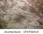 Brown Deer Fur Background...