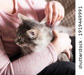 Small photo of Young woman prevent flea infection of her cat, with using flea remedy.