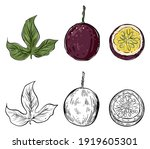 set of passion fruits  color... | Shutterstock .eps vector #1919605301