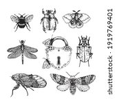 set insects. vector linear... | Shutterstock .eps vector #1919769401