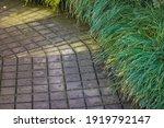 A Path In A Botanical Garden...