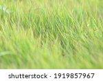 Abstract Grass Blur Background  ...