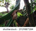 Snail On The Cactus Tree