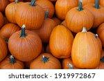 Large Orange Pumpkins  Solid...