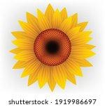sunflower in full bloom...   Shutterstock .eps vector #1919986697