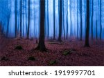Small photo of Forest mist in autumn fall. Misty forest trees. Forest mist view. Forest trees in autumn mist