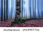 Small photo of Autumn forest mist. Tree trunk in autumn forest mist. Forest mist tree trunk. Forest mist in autumn fall