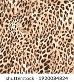 leopard skin print. leopard... | Shutterstock .eps vector #1920084824