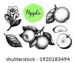 apples  leaf and flower. ink... | Shutterstock .eps vector #1920183494