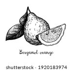 bergamot orange. ink sketch... | Shutterstock .eps vector #1920183974