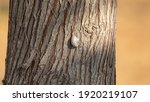 White Snail On A Tree With...
