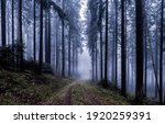Small photo of Forest mist trail. Trail to forest mist. Misty forest trail. Forest mist view