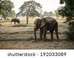 Indian Elephants Family In Ric...