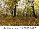 Fallen To The Ground Foliage Of ...