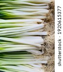 Small photo of Welsh onion background. Also commonly called bunching onion, long green onion and spring onion, is a species of perennial plant, often considered to be a kind of scallion.