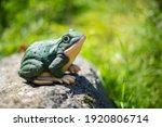 Large Figure Of Garden Frog...