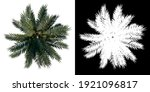 top view of plant  coconut palm ...   Shutterstock . vector #1921096817