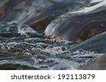 texture river creek stream | Shutterstock . vector #192113879