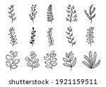 set of hand drawn leaf branch... | Shutterstock .eps vector #1921159511