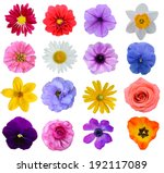 Stock photo set of colorful seasonal blooms 192117089