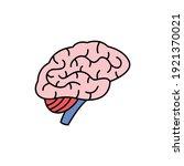 human organ brain color line...