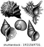 Sea Shells. Design Set. Art...