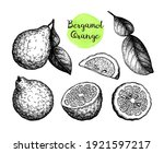 bergamot orange set. fruits ... | Shutterstock .eps vector #1921597217