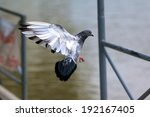 flying pigeon | Shutterstock . vector #192167405