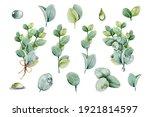 set bouquet with eucalyptus... | Shutterstock . vector #1921814597