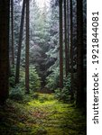 Small photo of Trail in deep forest scene. Forest trail. Fairy forest trail. Trail in forest