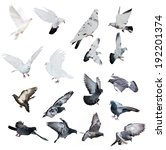 Set Of Doves Isolated On White...