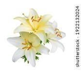 White Lily Flowers Isolated On...