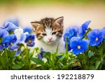 Adorable Kitten In The Flowers