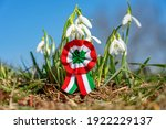 Small photo of close up tricolor rosette symbol of the hungarian national day 15th of march with snowdrop fair maid flower