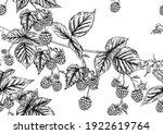 raspberry or blackberry. ripe...   Shutterstock .eps vector #1922619764