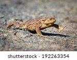 spring brown frog | Shutterstock . vector #192263354