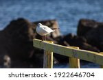 Seagulls Perched On A Wooden...