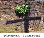 Beautiful Bodhi Tree Born And...