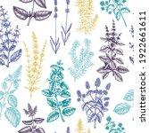 mints seamless pattern. hand...   Shutterstock .eps vector #1922661611