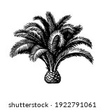 hand drawn vector illustration... | Shutterstock .eps vector #1922791061