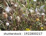 Grass  Dry Branches  Dandelions ...